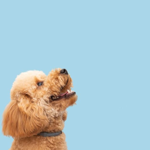 Inländischer niedlicher hund mit kopierraum Premium Fotos