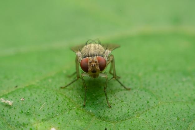 Insektenfliege am blatt, fokusaugen auswählen Premium Fotos