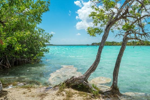 Inselufer mit blauem wasser. bacalar, quintana roo, mexiko Premium Fotos