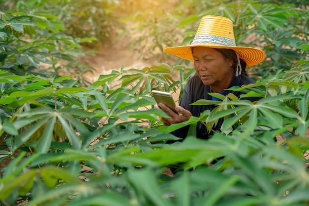 Intelligenter frauenlandwirt, der die tablette steht auf dem maniokgebiet für die prüfung ihres maniokafeldes hält. landwirtschaft und smart farmer erfolgskonzept Premium Fotos