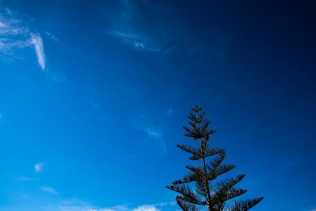 Intensiver hintergrund des blauen himmels mit einem tannenbaum, kopienraum. Premium Fotos