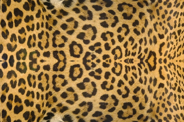 Jaguar, leopard und ozelot haut textur hintergrund Premium Fotos