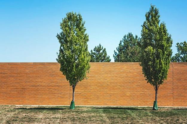 Junge bäume Kostenlose Fotos