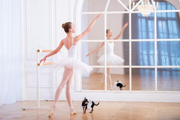 Junge ballerina, die auf spitze in einem ballett-tutu in der schönen weißen halle i mit ihrem rücken zum betrachter neben einem kleinen chihuahua-hund steht. Premium Fotos