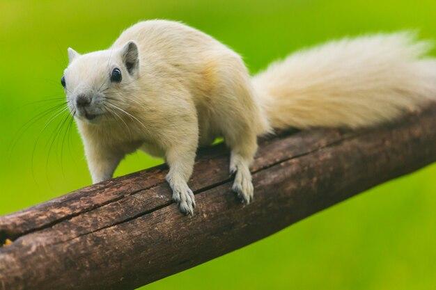 Junge eichhörnchen laufen um bäume herum, viel spaß Premium Fotos