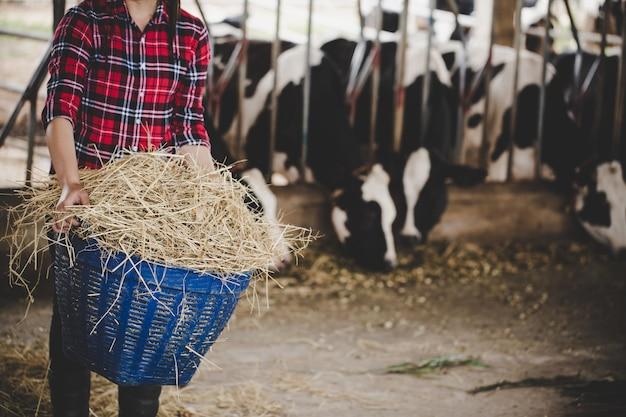 Junge frau, die mit heu für kühe auf molkerei arbeitet Kostenlose Fotos