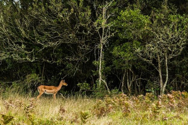 Junge hirsche laufen auf die bäume auf einem offenen grasbedeckten feld zu Kostenlose Fotos