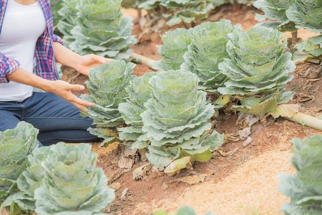 Junge weibliche landwirtin, die auf dem feld arbeitet und dekorative grünkohlpflanzen überprüft Kostenlose Fotos