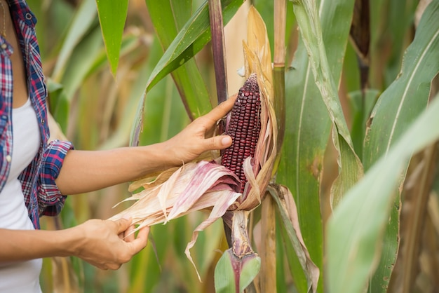 Junge weibliche landwirtin, die auf dem feld arbeitet und pflanzen überprüft Kostenlose Fotos