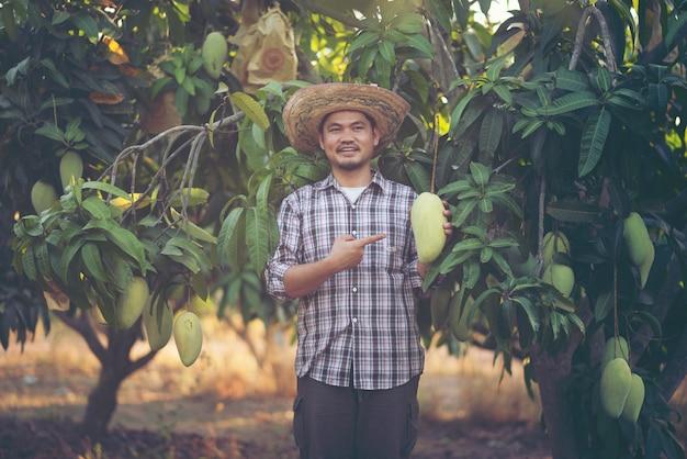 Junger asiatischer landwirt, der mangofrucht im biohof, thailand auswählt und zeigt Premium Fotos