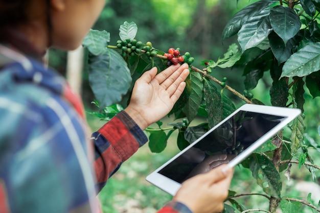 Junger asiatischer moderner landwirt, der digitale tablette verwendet und reife kaffeebohnen an der kaffeefeldplantage überprüft. anwendung der modernen technologie im landwirtschaftlichen wachsenden tätigkeitskonzept Premium Fotos