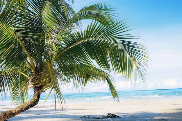Junger kokosnussbaum auf strand. Premium Fotos