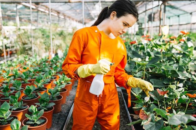 Junger weiblicher gärtner mit untersuchungsanlage der sprühflasche im gewächshaus Kostenlose Fotos