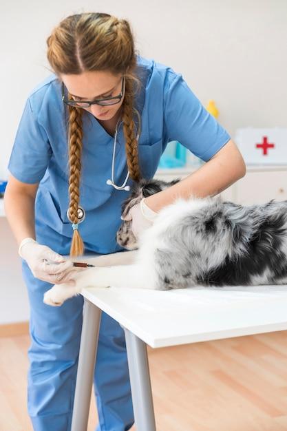 Junger weiblicher tierarzt, der hund mit einspritzung auf tabelle in der klinik einspritzt Kostenlose Fotos