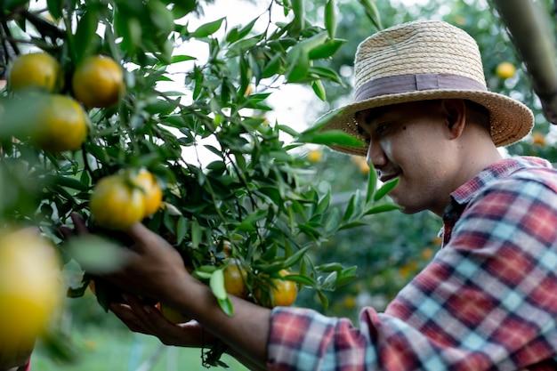 Junglandwirte sammeln orange Kostenlose Fotos