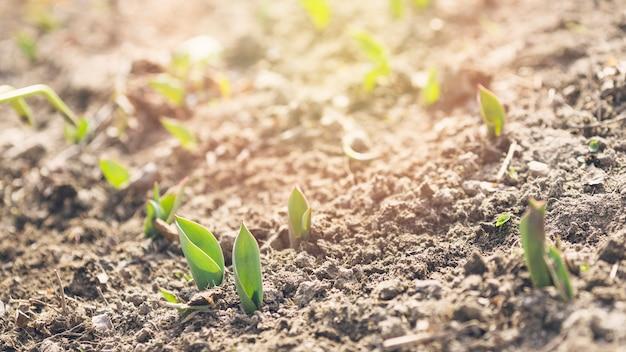 Jungpflanzen im boden Kostenlose Fotos