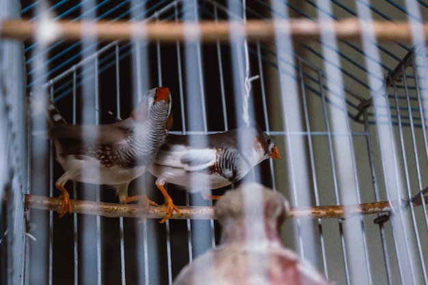 Käfigvögel Kostenlose Fotos