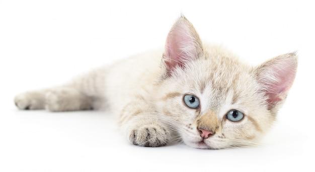 Kätzchen auf einem weißen Premium Fotos
