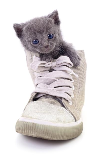 Kätzchen im stiefel isoliert Premium Fotos
