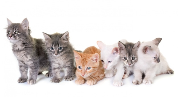 Kätzchen im studio Premium Fotos