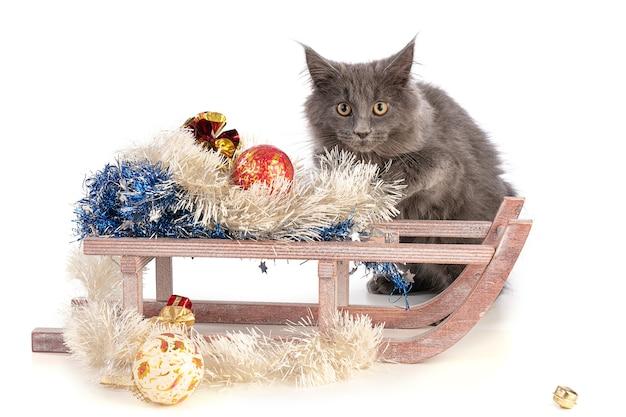 Kätzchen maine coon neben einem weihnachtsschlitten in den ferien Premium Fotos