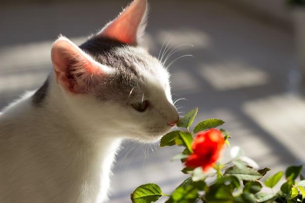 Kätzchen und blume Premium Fotos