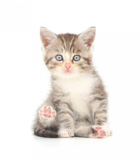 Kätzchen Premium Fotos