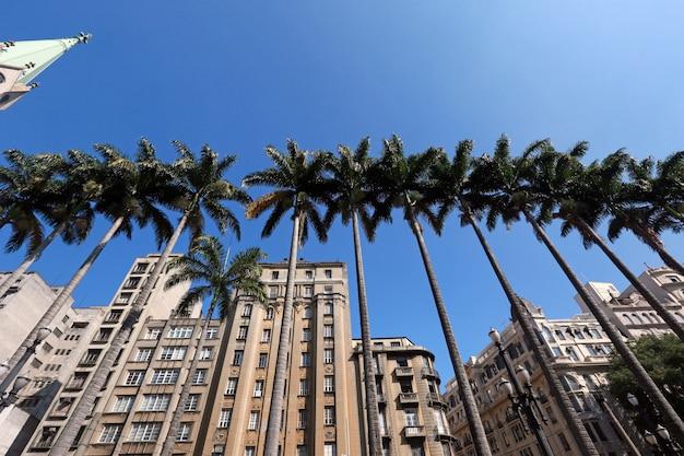 Kaiserliche palmen des se-platzes Premium Fotos