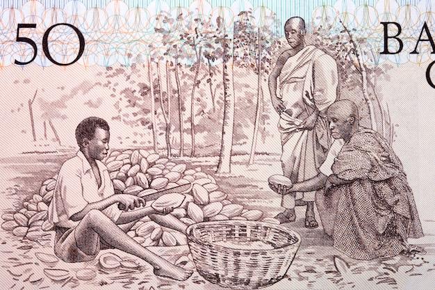 Kakaobauern aus altem ghanaischem geld Premium Fotos