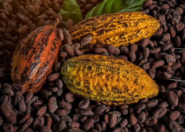 Kakaobohnen und kakaofrüchte auf hölzernem Premium Fotos