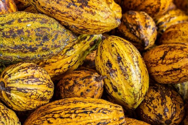 Kakaobohnen und kakaohülse auf einer holzoberfläche Premium Fotos