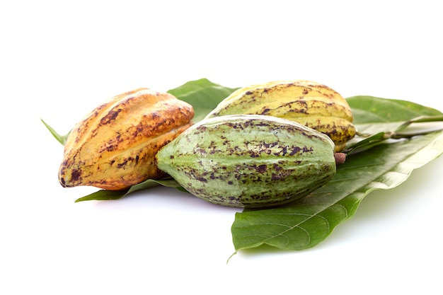 Kakaohülsen mit kakaoblatt auf einem weiß Premium Fotos