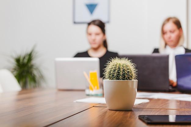 Kaktus auf bürotisch Kostenlose Fotos