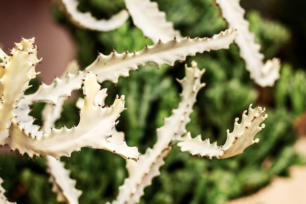 Kaktus der spitze im park. Premium Fotos