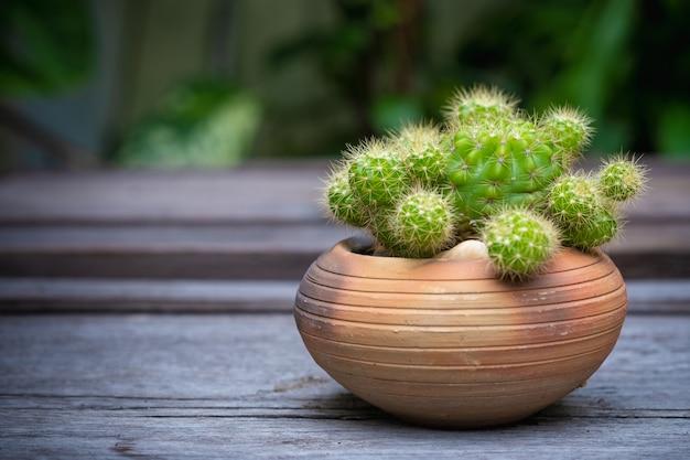 Kaktus (echinopsis) in den tongefäßen auf bretterboden Premium Fotos