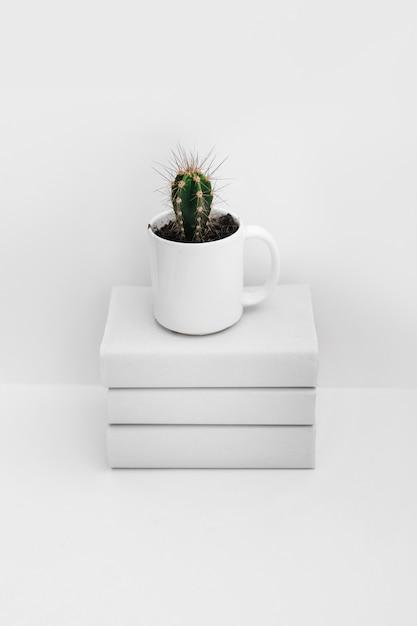 Kaktus im weißen becher über dem staplung der bücher getrennt auf weißem hintergrund Kostenlose Fotos