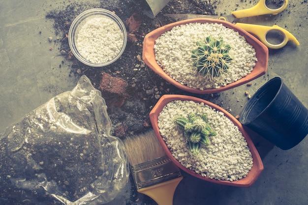 Kaktus in den töpfen auf zementtabellen-zimmerpflanzenkonzept pflanzen. Premium Fotos