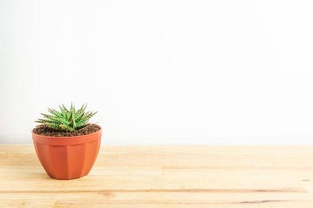 Kaktus oder succulents im topf auf dem hölzernen bürotisch und dem weißen hintergrund Premium Fotos
