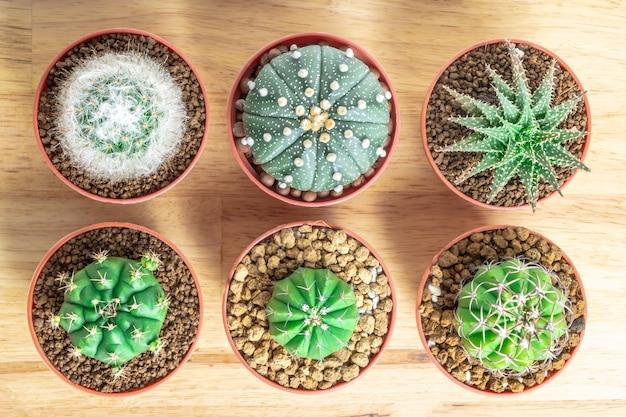 Kaktus oder succulents im topf auf dem hölzernen bürotischhintergrund Premium Fotos