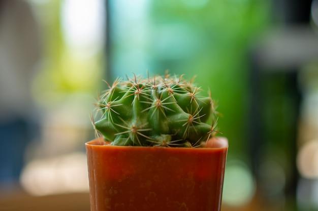 Kaktus platziert auf einen holztisch Premium Fotos