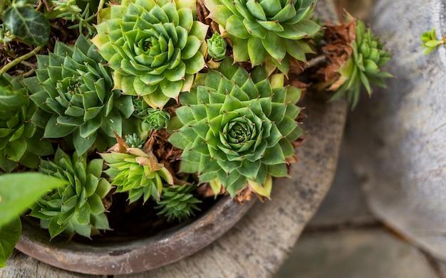 Kaktus-topf Kostenlose Fotos