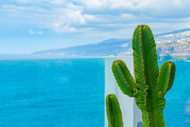 Kaktus wächst auf dem balkon hinter glasgeländer über dem ozean. meer mit kleinen wellen im hintergrund Kostenlose Fotos