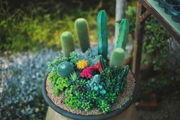 Kaktusbaumnahaufnahme Premium Fotos
