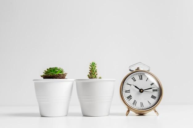 Kaktusblumentopf und weißer wecker Premium Fotos