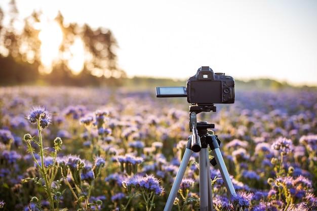 Kamera auf einem stativ im bereich der blühenden phacelia Premium Fotos