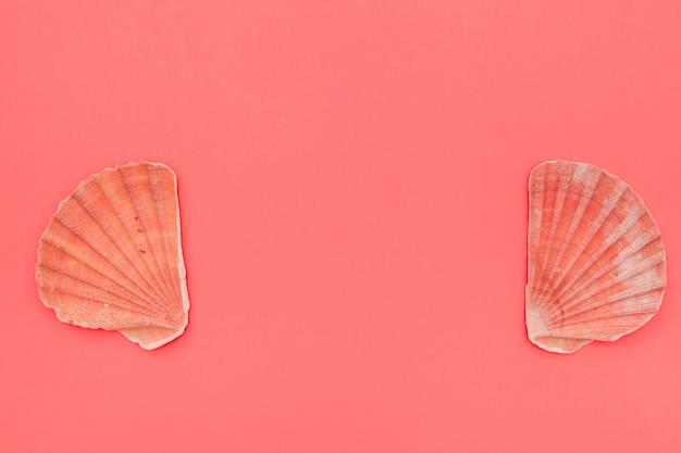 Kammmuschelmuscheln auf korallenrotem hintergrund mit kopienraum für das schreiben des textes Kostenlose Fotos