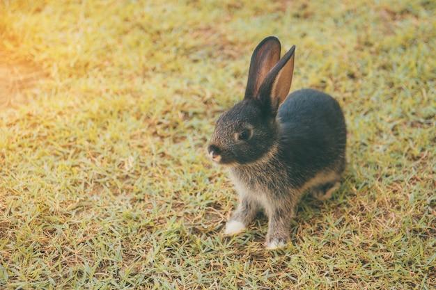 Kaninchenhäschen im garten Premium Fotos