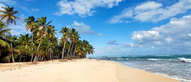 Karibischer strand mit palmen und blauem himmel Kostenlose Fotos