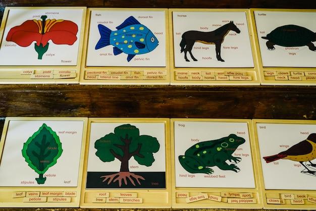 Karten mit namen von tieren in einer montessori-schule. Premium Fotos