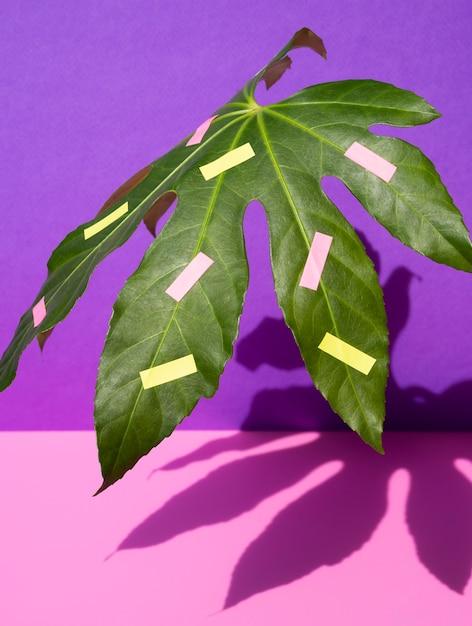 Kastanienblatt mit kontrastierendem rosa und violettem hintergrund Kostenlose Fotos